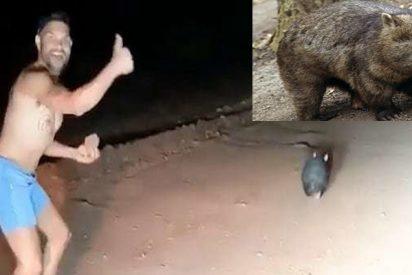 El imbécil que lapida hasta la muerte a este wombat es un policía fuera de servicio