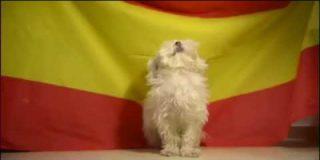 España: Este perro es más patriota que la cabra de la Legión