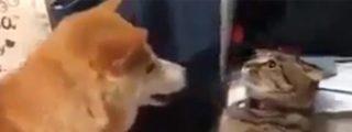 El gato malvado finge ser estatua para dar una zurra al nuevo perro de la familia