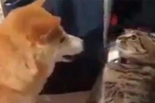 Vídeo Viral: el gato malvado finge ser estatua para dar una zurra al nuevo perro de la familia