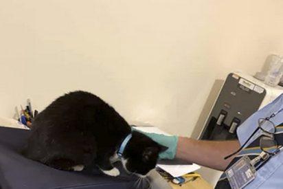 Un gato se esconde dentro del equipaje para 'viajar sin permiso' con sus dueños y lo pillan