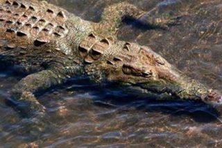 Este cocodrilo se merienda a un perro delante de su dueño