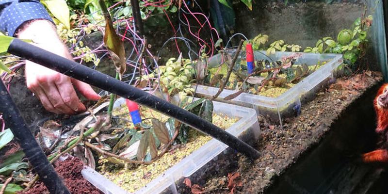 Este helecho es la primera planta del mundo en hacerse un selfi