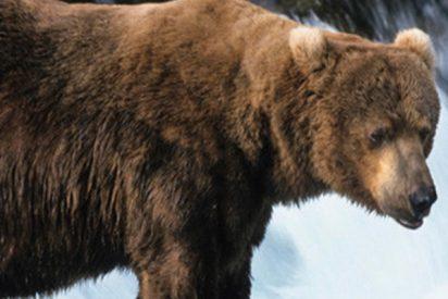 Este oso acecha a espaldas de dos pescadores que no se percatan de su presencia