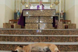 Este sacerdote brasileño hace misa con perros callejeros para buscarles un nuevo hogar