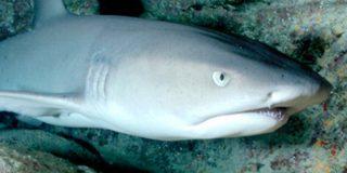 Este tiburón se merienda a otro ante la mirada atónita de los visitantes en un zoológico de Bélgica
