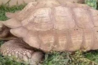 Muere Alagba, la tortuga más vieja de África, a los 344 años