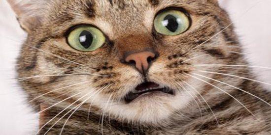 Vídeo Viral: la niña atropella al gato y se da a la fuga