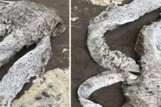Descubren esta misteriosa criatura marina de 3 metros en una playa del Reino Unido