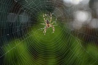Un chico se despierta con un fuerte dolor y vértigos y horas después descubre una araña alojada en su oído
