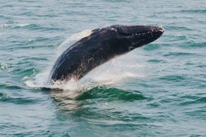 Las ballenas 'enloquecen' tras un sismo en California