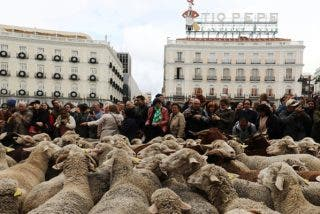 Las ovejas 'se hacen con las calles' del corazón de Madrid