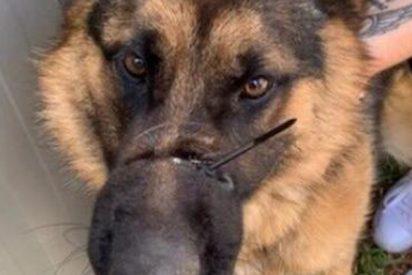 Logra evitar entrar en prisión tras atar con un cable el hocico de su perra