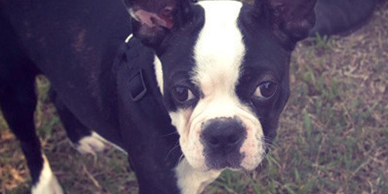 Los emotivos carteles de un niño conmueven a la Red y le ayudan a recuperar a su perro robado