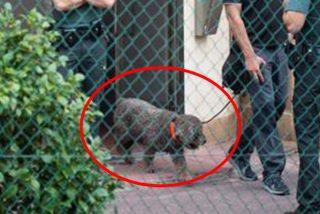 Marley, el perro de la Guardia Civil experto en detectar restos humanos de desaparecidos muere de un infarto