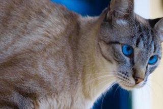 Mujer le pone a su gato un 'seguidor de actividad' para conocer su vida nocturna y acaba alucinando con lo que descubre…