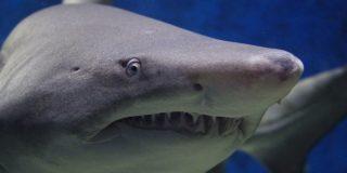 Niño de 8 años pesca un tiburón de 314 kilos