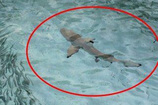 Pareja de turistas entra en pánico al percatarse que estaban siendo acechados por este tiburón