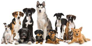 El mejor amigo del hombre... es el perro