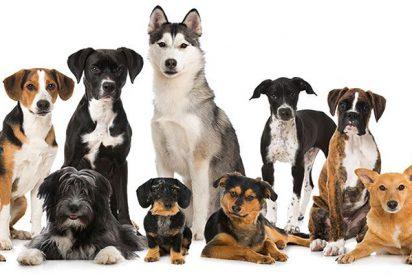 Mascotas: en España hay más de 20 millones de animales de compañía