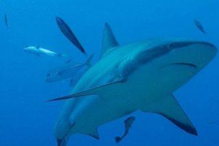 Submarinista se salva tras luchar contra el ataque de un tiburón de 4,5 metros
