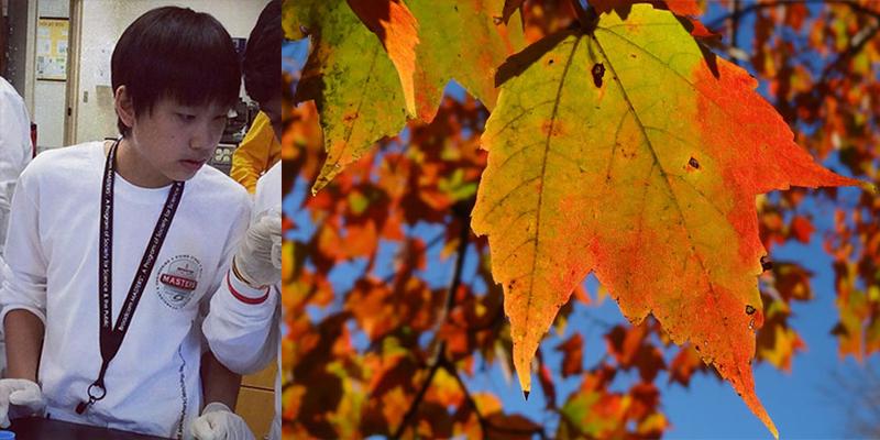 ¡Un adolescente convierte una tarea de otoño en un proyecto de ciencias!