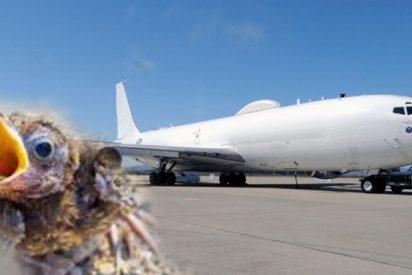 Un 'pajarito' avería este super avión estadounidense diseñado para la guerra nuclear