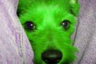 Un perro verde nace en EE.UU.