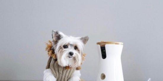Mejores cámaras de vigilancia para mascotas 2019