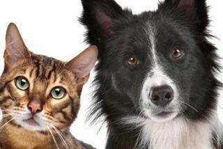 Este perro y este gato luchan juntos contra una rata gigante y se hacen virales