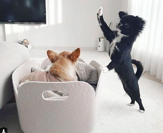 Mejores cámaras de vigilancia para mascotas
