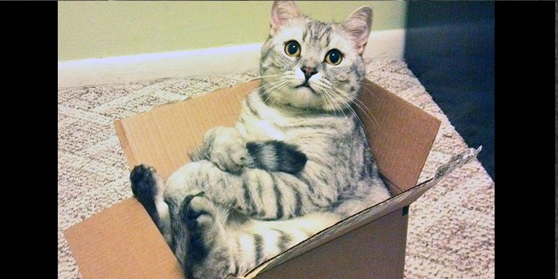 ¿Se podría abrir la caja sin molestar al gato de Schrödinger?