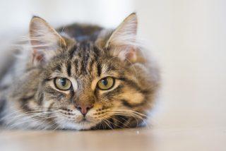 ¿A qué no adivinas que miran tan fijamente los gatos?