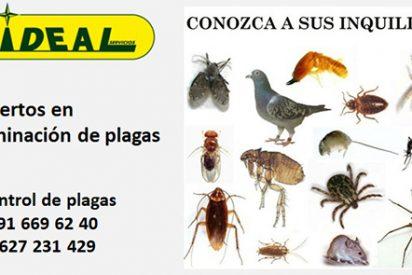 Alarma social en Madrid Plagas de chinches y cucarachas