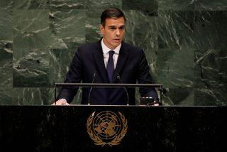 Ridículo mundial: la vergonzosa pifia de Pedro Sánchez al felicitar al nuevo premio Nobel de la Paz