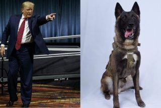Trump ensucia el golpe de EEUU al ISIS: publica una foto falsa del perro héroe de la operación militar