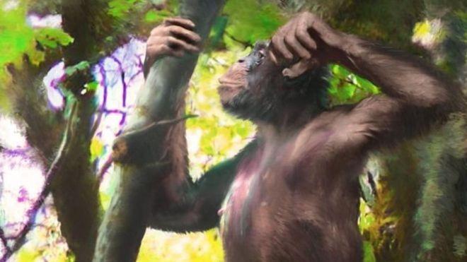 """¿Sabes por qué es tan revolucionario el hallazgo de un simio con brazos de mono y """"piernas humanas""""?"""