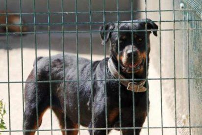 Condenan a un hombre a 2 años y medio de cárcel después de que sus cuatro perros de raza peligrosa mataran a un hombre