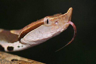 Un hombre se amputa un dedo tras ser mordido por una serpiente venenosa y los médicos le dicen luego que no era necesario