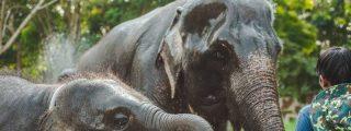 Un elefante bautizado como Osama bin Laden mata a cinco residentes de una aldea en la India