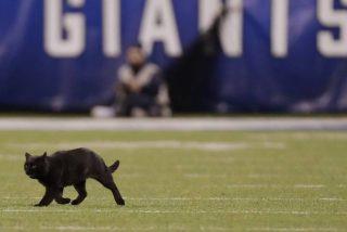 Este gato negro salta al terreno de juego en un partido de fútbol americano y atrae toda la atención durante varios minutos