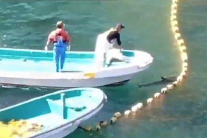 Vídeo viral: Un dron graba el horror de la cacería de delfines en Japón en una bahía totalmente teñida de rojo sangre
