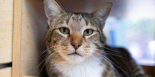 Vídeo Viral: 'Castigan' a este gato de un refugio por su 'manía' de ayudar a fugarse a los demás felinos