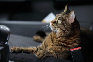 Vídeo viral: Olvida cerrar la ventanilla de su coche, lo encuentra ocupado por gatos y se desata el caos absoluto