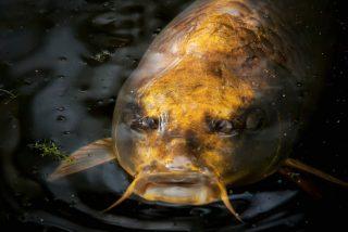 Vídeo viral: Graban a este pez con 'rostro humano' en China