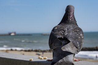 Vídeo viral: Esta paloma 'polizón' retrasa la salida de un avión
