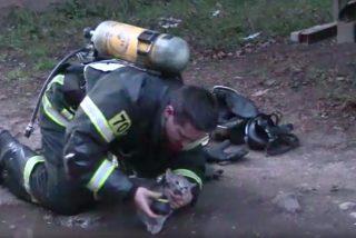 Vídeo viral: Este bombero reanima a un gato intoxicado en un incendio