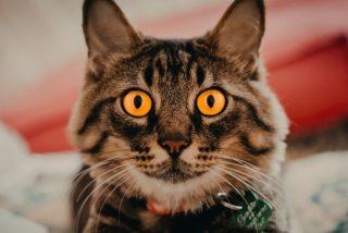 Vídeo viral: Esta es la cara que se le queda a tu gato cuando te 'enmascaras' con un filtro felino