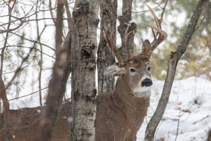 Descubren a este ciervo de tres cuernos en EE.UU.