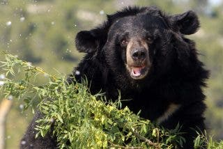 Vídeo viral: Este oso 'kung fu' sorprende a los visitantes de un zoológico con sus habilidades para controlar un palo